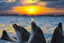 Saliendo los delfines