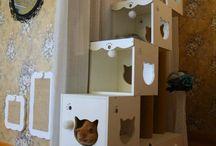 Felis Catus / Cats ( Felis Catus) and Feral Cats (Felis Silvestris Catus)
