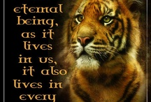 Nature &Animals  / Pics And Quotes