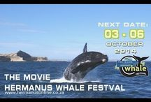 Festivals & Events Hermanus / Hermanus presents loads of Festivals, Shows and Events all year round that show-case all that Hermanus has to offer.