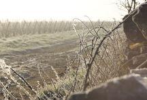 Un hiver dans le vignoble ... / Les vignes hibernent en Bourgogne
