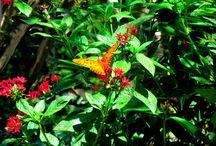 Beautiful Butterflies / Closeup images of butterflies
