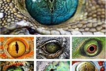 OJOS / Elemento visual y natural que transmite verdad o mentira.