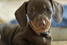 Puppies :-)