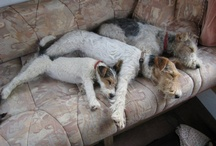 Dog Crush / Aici vei gasi o selectie de caini absolut adorabili!