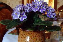 flori in ghiveci