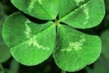 Green colors