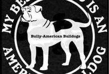 American Bulldog Love