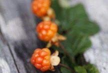 Finnish wild berries