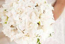 Brige&Wedding