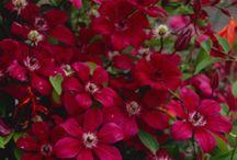 Plant Lust / Garden Fever!