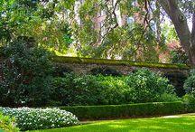 Gardens, Fences, Gates, and Walls for Charleston / by Sanna Davis