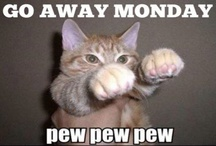 Adorable kitten / Too good not to re-pin. How I feel every Monday morning