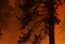 Красиво и опасно. / Лесной пожар и человек.