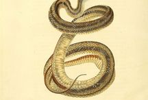 serpents / courbes sinueuses