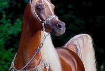 cavalo  e sela