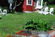 Pinterest puutarha