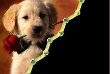cornici cani