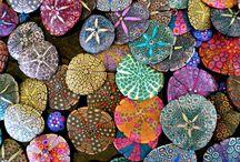 貝殻、ヒトデ、石、砂