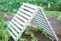 Gardening / by Quirky Dana