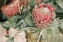 Native Flowers/Wildflowers