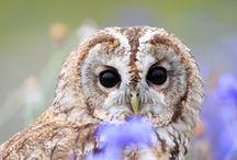 Owls / by Iris Law