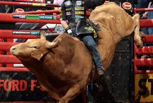 Rodeo!! / Love rodeos