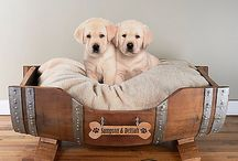 Purrfect Pet / Cute ideas for our new puppy.. / by Kory Robinson
