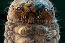 La Soie / Tout savoir sur le tissu et textile en soie naturelle, pure soie et soie sauvage. All about natural, wild, raw silk. Comment est tissée et fabriquée la soie, l'histoire, l'origine de la soie en Asie. De la Chine à la Thailande, Inde, Laos, Cambodge ou Vietnam, les différents types de fibres de soie naturels. Présentés par Princesse foulard.com