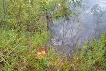 3º Batalhão de Infantaria de Selva – Apoio à Defesa Civil