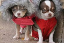 Winter Pets / Animals dressed for winter as well as some helpful pet tips!
