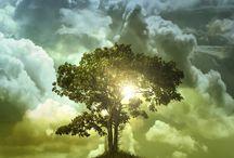 God's Creation / by Erica Johnson
