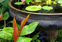 water features small