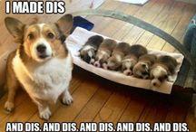 funny or cute pics
