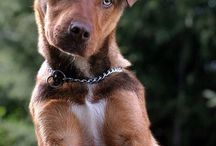 köpekler aşiliğim benim men sevdiğim köpeğim
