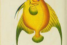 море-рыбы