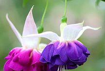 Çiçekler/Flowers