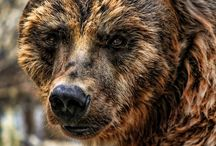 Grizzly.OURS.