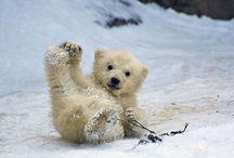 Polar (*^▽^*) / I ❤ Polar