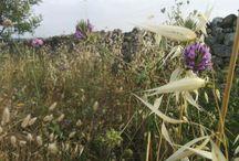 #fiori di #lamadantico