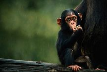 Animals / by Chris Hutson Hand