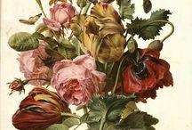 painting botanicals