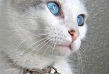 Gods / Cats, cats, cats, cats, cats... I love them