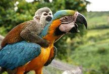 Animais lindos