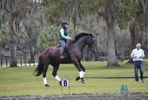 Horses xx