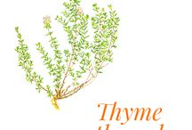 Thyme thymol / Common thyme (Thymus vulgaris) is a perennial subshrub of the Lamiaceae family that prefers stony ground and sun-drenched garrigues.  Worldwide thyme exchanges are estimated at two thousand tonnes per year. It is cultivated in France over nearly three hundred hectares, though it is faced with increasing competition from Turkey, Poland, Morocco and Spain.