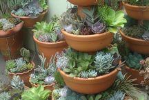 Min botaniske hage