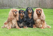 Top 10 Breeds / by Dogsclub .TV