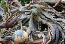 Knotty wood stumps