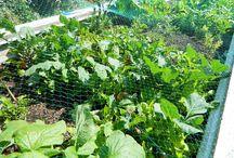 Gardens of Food